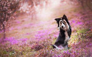 Cei mai frumoși câini din 2018: 50 de imagini splendide cu cei mai buni prieteni ai omului