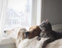 15 imagini care demonstrează că Golden Retriver sunt cei mai buni câini din lume