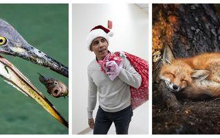 Imaginile anului: 45 de fotografii care ne-au impresionat în 2018