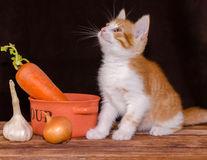 Pot să-i dau morcovi pisicii?