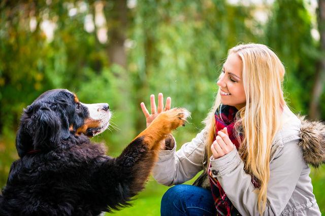 Imagini pentru oameni si câini photos
