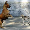 Cum se înţeleg câinii şi pisicile? 20 de imagini extrem de amuzante