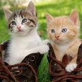 Pot pisicile să mănânce zmeură?