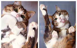 Ai pisică, ia-ți masă de sticlă! 30 de imagini în care pisicile se văd altfel