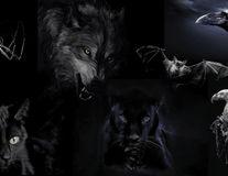 Alege un animal şi vei descoperi latura întunecată a personalităţii tale