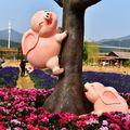 Made în China: S-a suit scroafa-n copac!