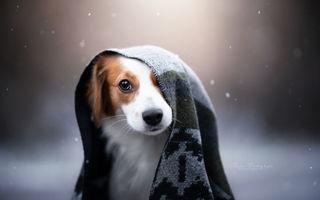 45 de câini pur și simplu frumoși: Cum să nu-i iubești?