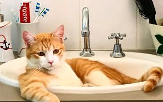 Relaxare totală: Pisicile care se simt ca acasă indiferent de situaţie