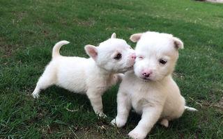 Şi animalele sărbătoresc Ziua Îndrăgostiţilor! 20 de imagini adorabile