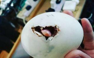 Oul surpriză: Delicatesa cumpărată într-un restaurant s-a transformat într-o rățușcă simpatică - FOTO