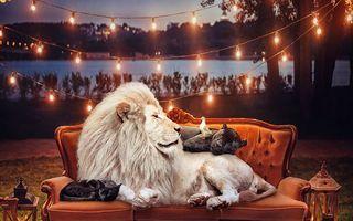 Cartea Junglei în culori: 16 portrete impresionante cu animale pe cale de dispariție