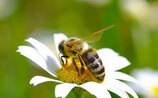Ce plante te ajută să atragi polenizatorii în grădina ta