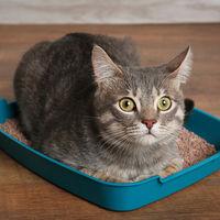 Urina de pisica - Cum elimini mirosul rapid din casa