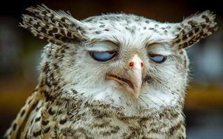 Surprinse în cel mai prost moment! 15 animale haioase
