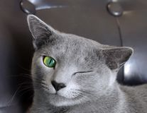 Numai pisici nu sunt! 25 de situaţii amuzante