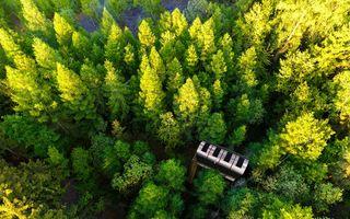 Casa în copac, versiunea modernă: Vezi pădurea de la înălțime!