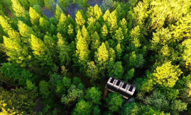 casă în copac