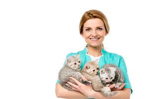 Ce ar trebui să știi dacă ai mai multe pisici în casă
