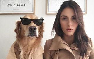 Câinele cu costum și ochelari: 22 de imagini geniale în care se comportă ca un om