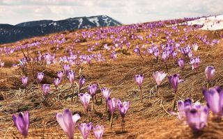 Vine, vine primăvara: 15 locuri din lume care arată superb în cel mai așteptat anotimp