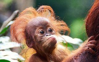 Credeai că doar părul tău are o zi proastă? Şi animalele trec prin asta! 20 de imagini amuzante