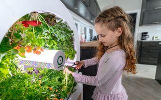Grădina din casă: Îți cultivi produsele în bucătărie