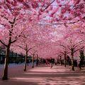 16 alei din toată lumea care arată fantastic primăvara