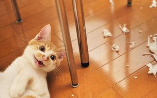 Nu e nimic mai interesant decât viaţa unei pisici: 20 de imagini amuzante