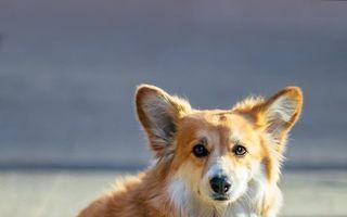 Câinele devenit vedetă: A apărut pe afişele unor filme celebre şi stârneşte hohote de râs