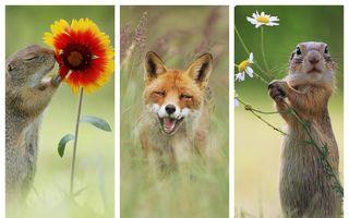 Aventuri în pădurea veselă: Când animalele au chef de joacă - FOTO