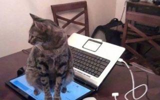 Năzbâtiile pisicilor: 15 imagini care demonstrează că nu sunt atât de cuminţi precum par