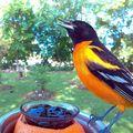 A montat o cameră ascunsă pentru a fotografia păsările, iar rezultatele sunt uimitoare! 20 de imagini
