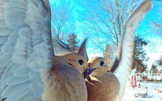 Pasionată de păsări, o femeie le fotografiază zi de zi în cele mai uimitoare ipostaze. 30 de imagini