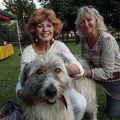 Câine cu personalitate: Ciobănescul mioritic care a cucerit publicul la un concurs din Anglia - VIDEO