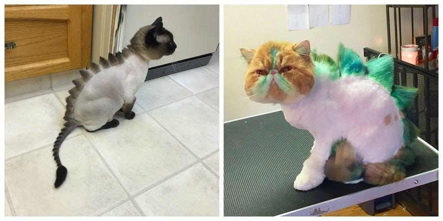 oftalmologie pentru pisici)
