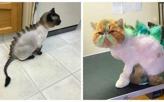 Tendinţe ciudate: 20 de tunsori pentru pisici care le transformă în dinozauri
