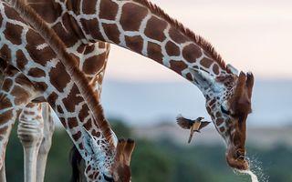 Au cucerit pe toată lumea! 30 de fotografii de pe Instagram remarcate de National Geographic