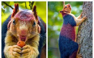 Veverița tricoloră, o minune a naturii: 9 imagini superbe care nu au nevoie de Photoshop