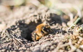 Colapsul populației de insecte este un avertisment pentru întreaga omenire