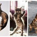 Pisicile dansează: 35 de imagini în care arată cele mai bune mișcări