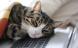 De ce iubesc pisicile atât de mult tastatura laptopului sau a computerului?
