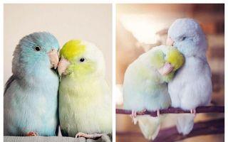 Dragostea din tei: 20 de imagini adorabile cu papagalii de buzunar