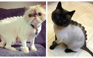 Tunsoarea dinozaur, noua modă pentru pisici: 12 imagini cu care trebuie să te obișnuiești