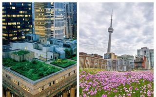 Minunile arhitecturii moderne: 10 clădiri cu grădini pe acoperiș