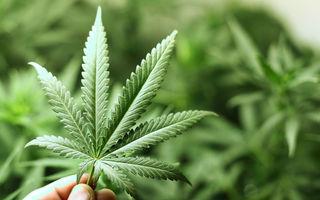 Marijuana poate crește riscul demenței și este utilă pentru tratamentul epilepsiei