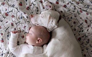 Ştiu ce înseamnă o prietenie adevărată! 15 animale extrem de iubitoare
