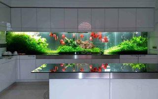Idei de decor: Cele mai uimitoare 25 de acvarii