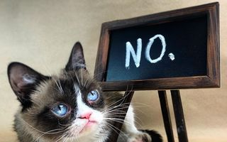 Grumpy Cat, una dintre cele mai frumoase pisici din lume, a murit
