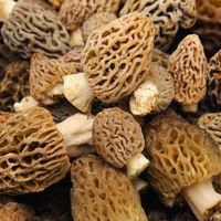 Ciupercile zbarciog (Morchella morel): 5 beneficii pentru sanatate