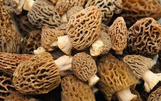 Ciupercile zbârciog (Morchella morel): 5 beneficii pentru sănătate